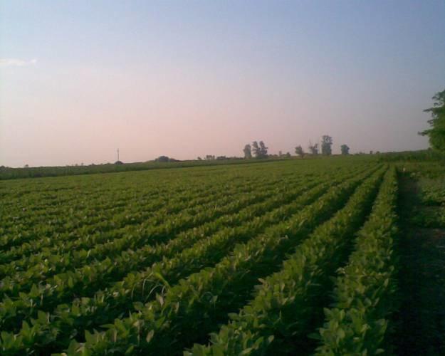 Prodaja organske soje