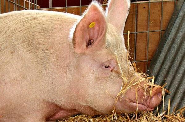 LIKRA SM 37/R - dopunska krmna smjesa za tov svinja