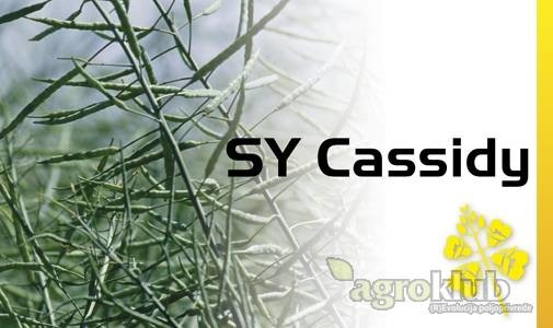 SY Cassidy - uljana repica