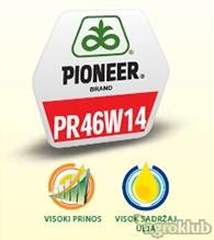 PR46W14 - hibrid uljane repice