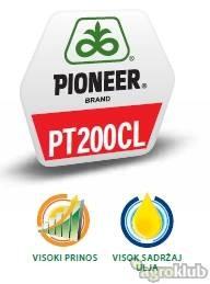 PT200CL - hibrid uljane repice