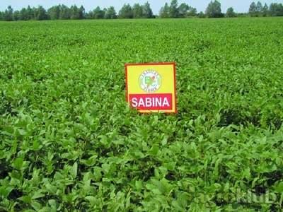 Soja - SABINA