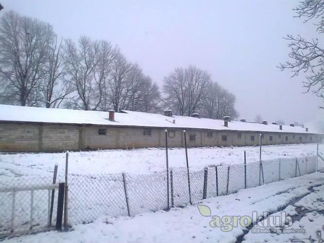 Farma pilića: Sunja, skladišni/radiona, 15000 m2