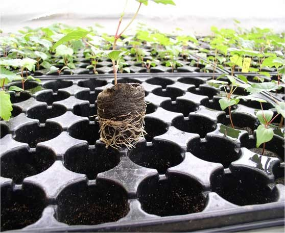 Sijanje sjemena u kontejnere od 209 rupa
