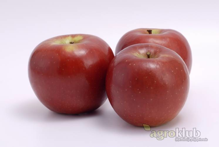 Rozela sorta jabuke