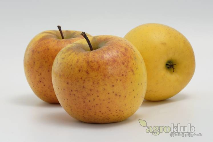 Orion sorta jabuke