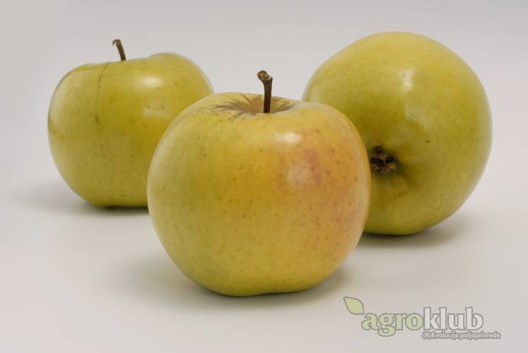 Sirius sorta jabuke