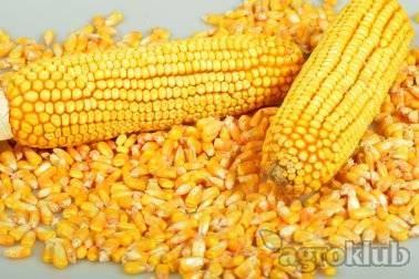 DKC5276 hibrid kukuruza