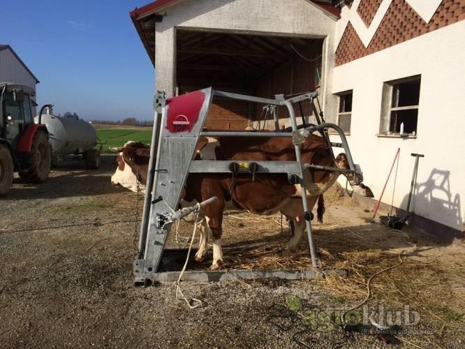 Profesionalna obrada papaka kod mliječnih krava