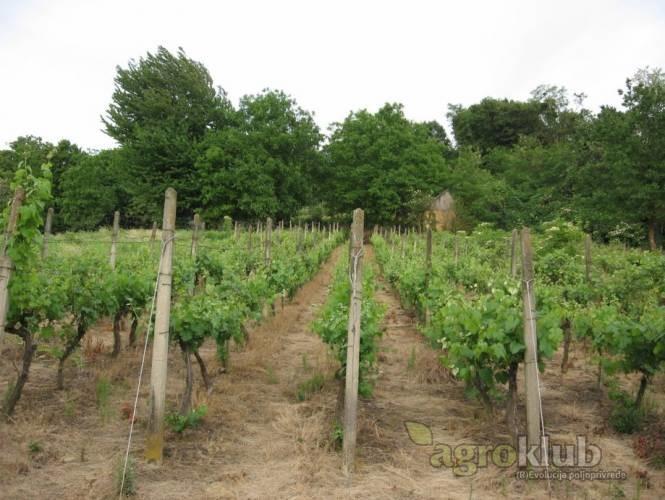 Vinograd, poljoprivredno zemljište, 2000m2 Rasinja