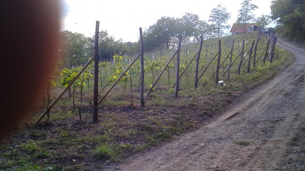 Vinograd, poljoprivredno zemljište: Zelina, Žitomir, 6950 m2 SNIŽENO