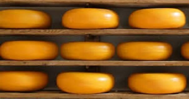 Premaz CESKA za zaštitu sira