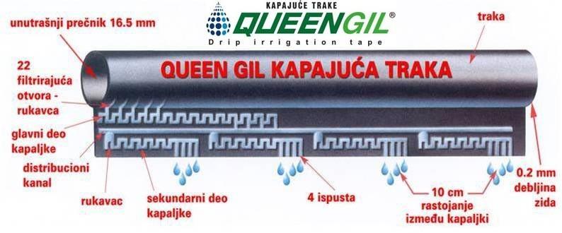 Queen Gil kapajuća traka