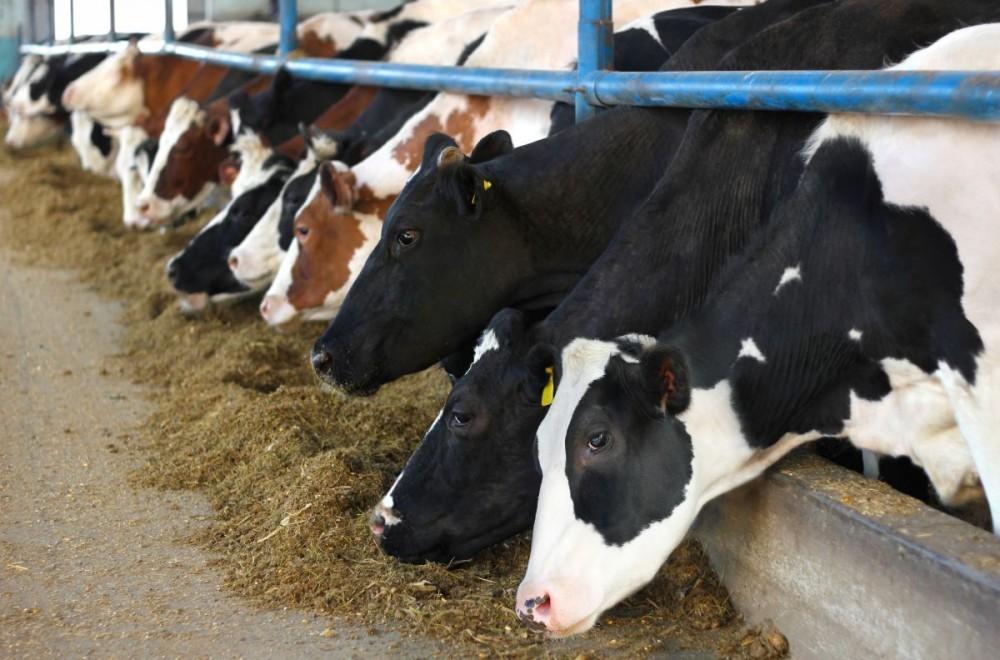 Savjetnik na terenu za hranidbu domaćih životinja - Koprivničko-križevačka županija