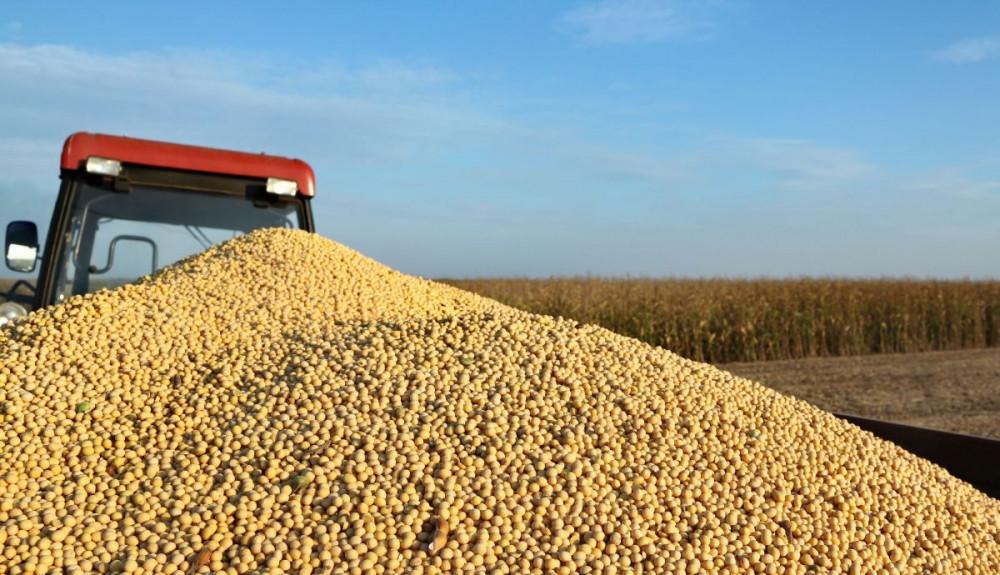Otkupljujemo merkantilnu soju po 2,25 kn/kg