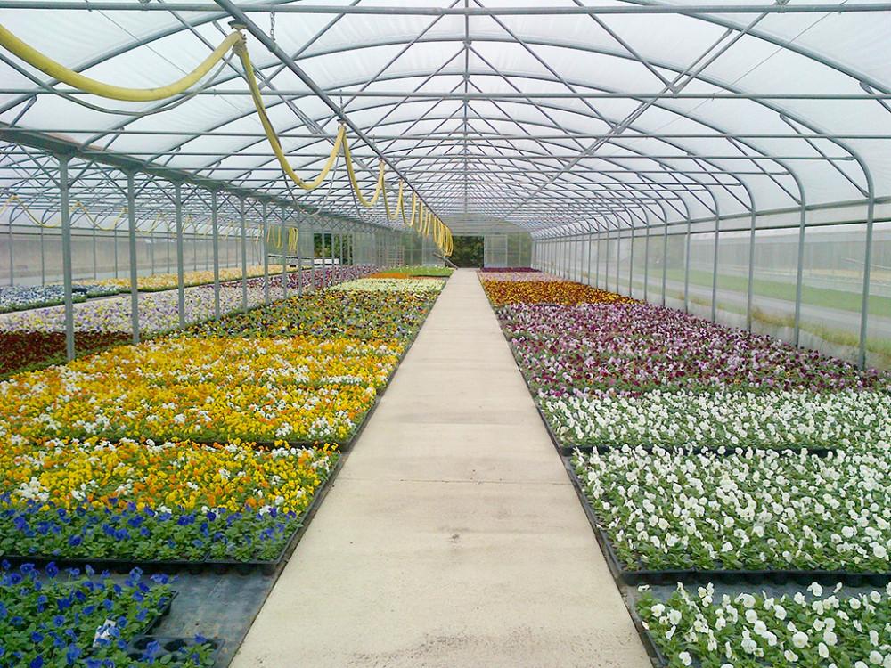 STAKLENICI, PLASTENICI , za brzo kliajnje setvenog seme - special  inkubator