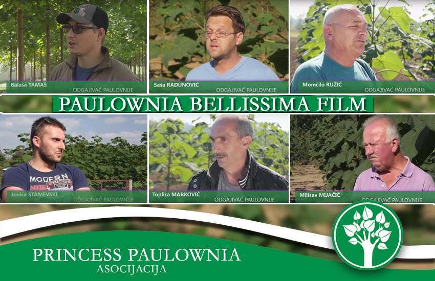 Paulownia Bellissima sertifkovane sadnice