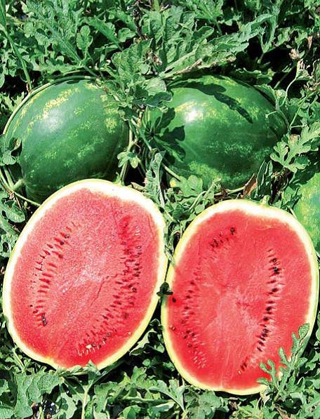 Sjeme lubenice EARLY CRIMARA F1