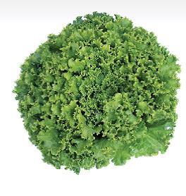 Sjeme salate GARONE