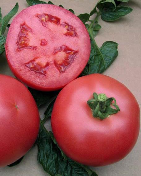 Sjeme rajčice FUJI PINK F1