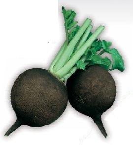 Sjeme crne rotkve - povrtnice PANTER