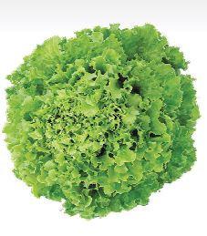 Sjeme salate BELALLISA