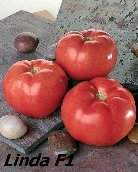 Sjeme rajčice LINDA F1