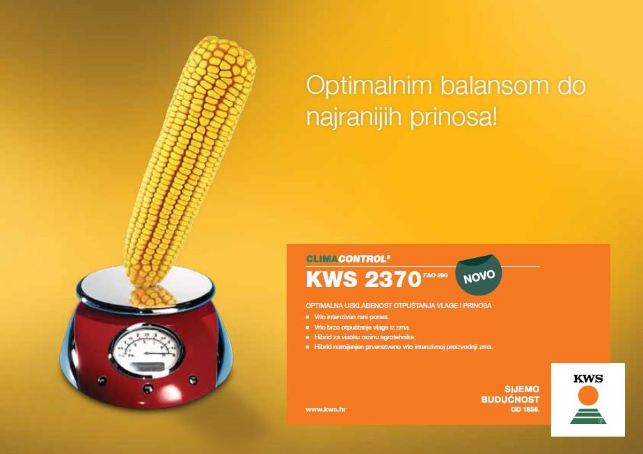 KWS 2370 - hibrid kukuruza FAO 290 - NOVO