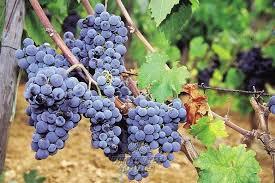 Crno vino i rakija