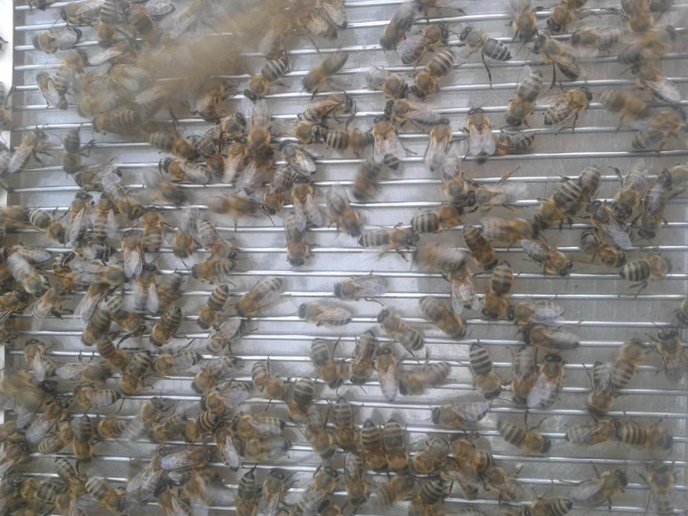 sakupljač/skupljač pčelinjeg otrova