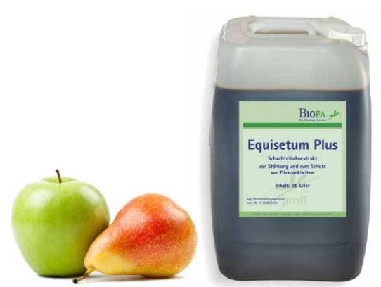 Equisetum Plus