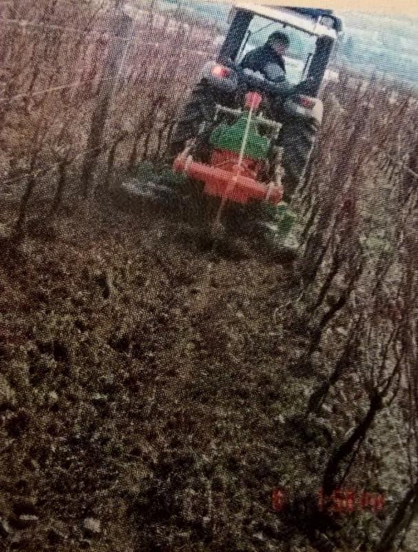 Vinogradarska kopačica