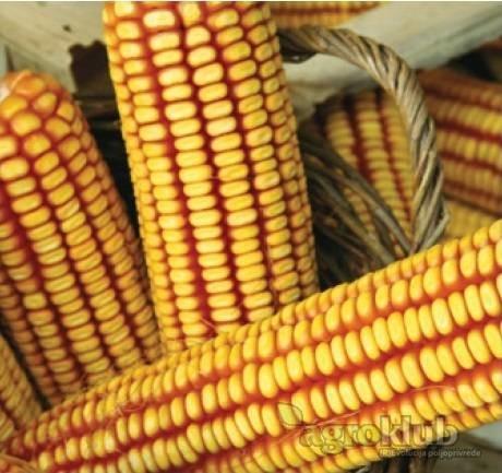 KWS 1394 - Z - hibrid kukuruza, FAO 410