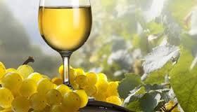 Vino bijelo kvalitetnih sorti