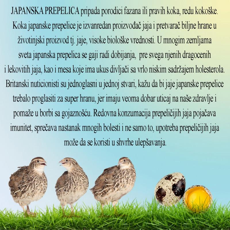 Prodaja jaja japanske prepelice