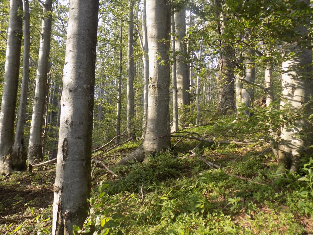 Kupujemo šume