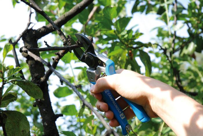 Profesionalno orezivanje i zastita vinove loze,voca i ruza