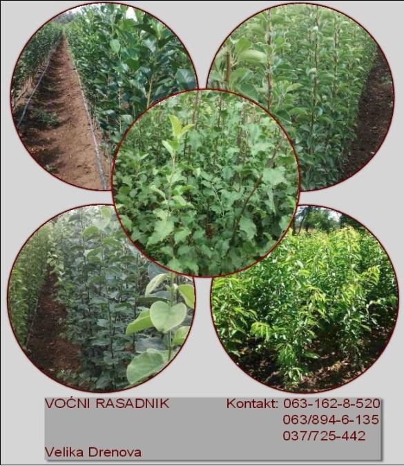Prodaja vocnih sadnica