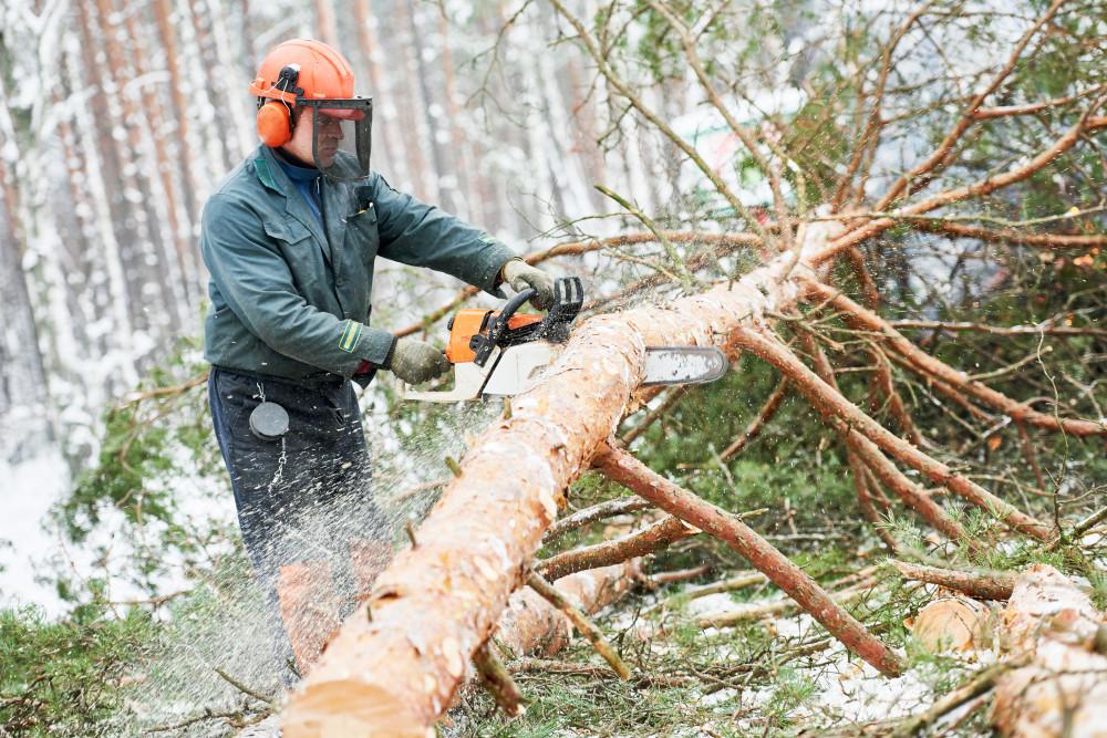 Uslužno rušenje šuma. Izvlačenje trupaca. Kupnja šuma