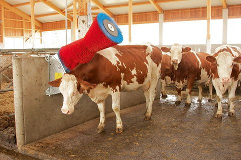 Četka za krave , AUTOMATSKA