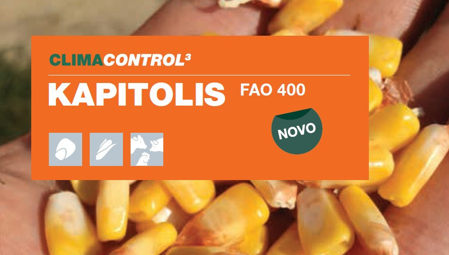 KAPITOLIS - hibrid kukuruza - FAO 400 - NOVO