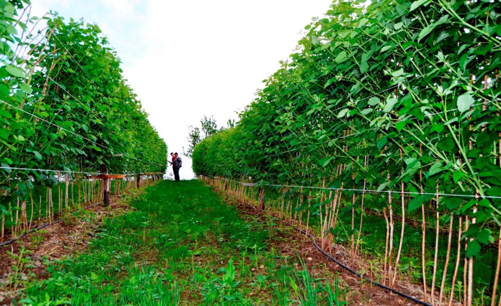 Agrocentar - Sistemi za navodnjavanje