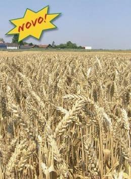 Ozima pšenica - Bc  IRENA