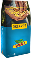 DKC4795 hibrid kukuruza, FAO 400