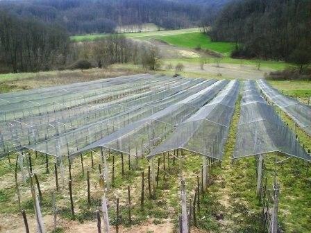 Metalni nosači (kišobrani) - zaštita vinograda i voćnjaka od TUČE