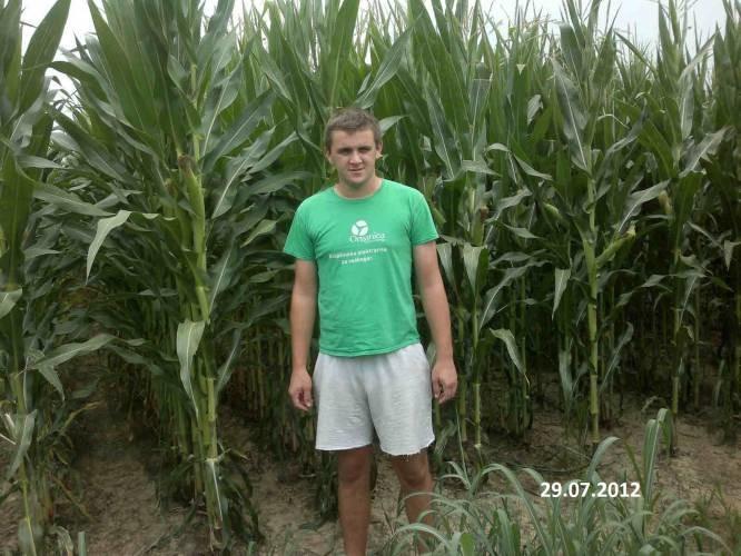Kukuruz gnojen Glucohumatom