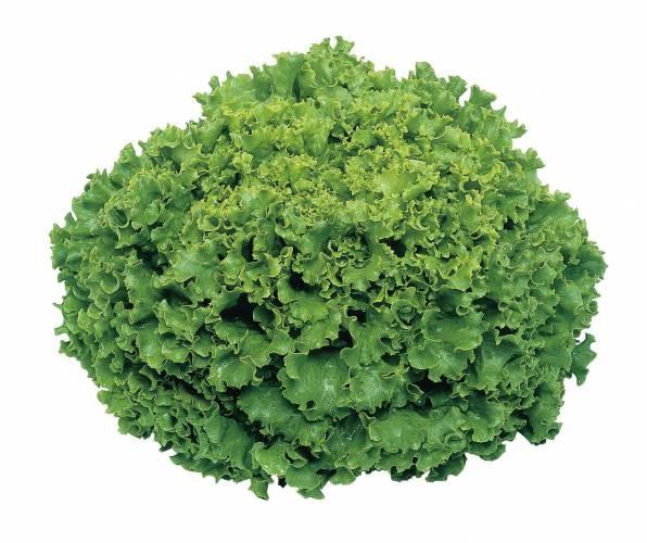 Funly- salata