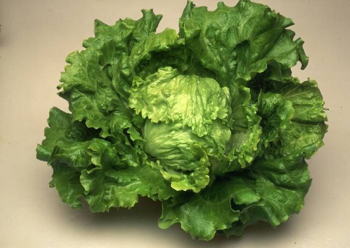Masaida - salata