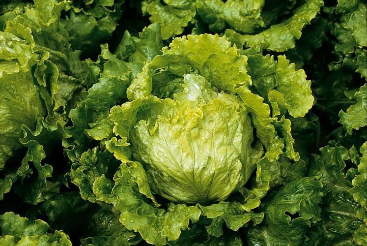 Edurne - salata