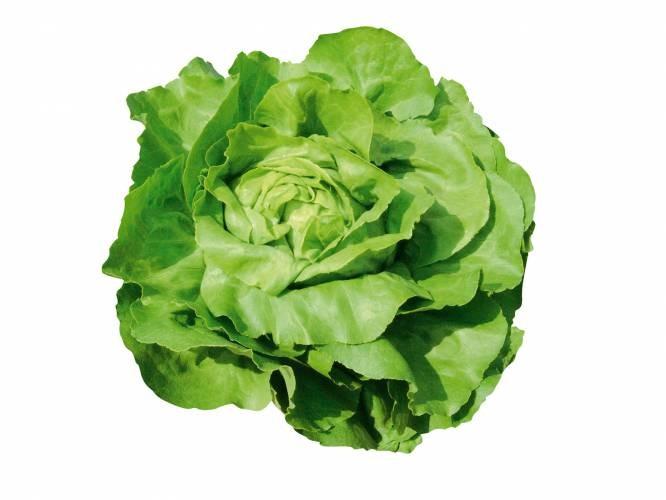 Tizian- salata